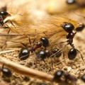 وفاة طفلة بشكل مأساوي والمتهم مستعمرة النمل