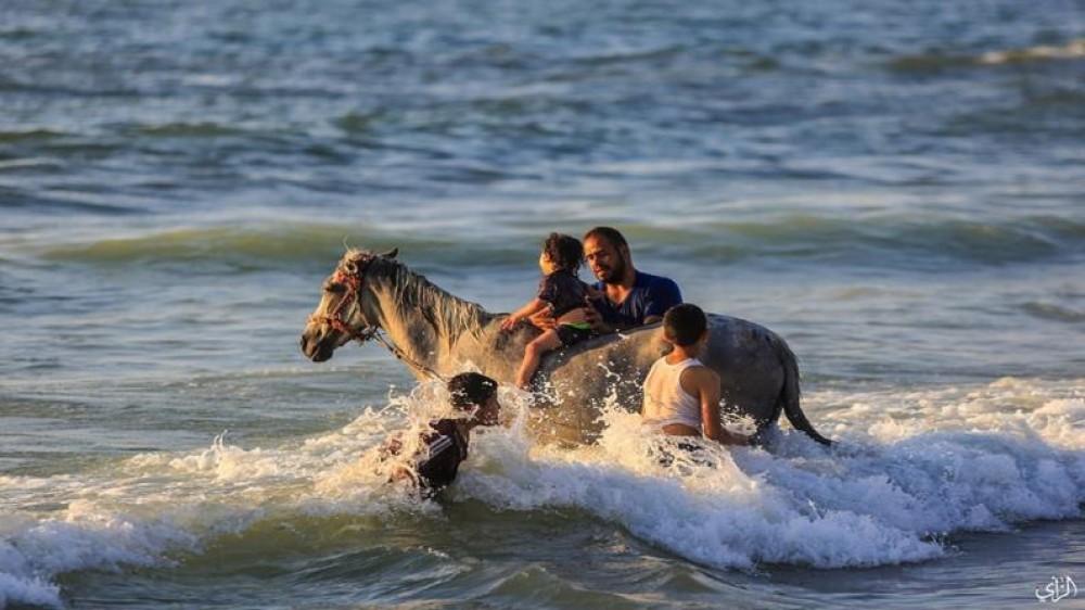 بلدية خانيونس تمنع دخول الحيوانات للبحر