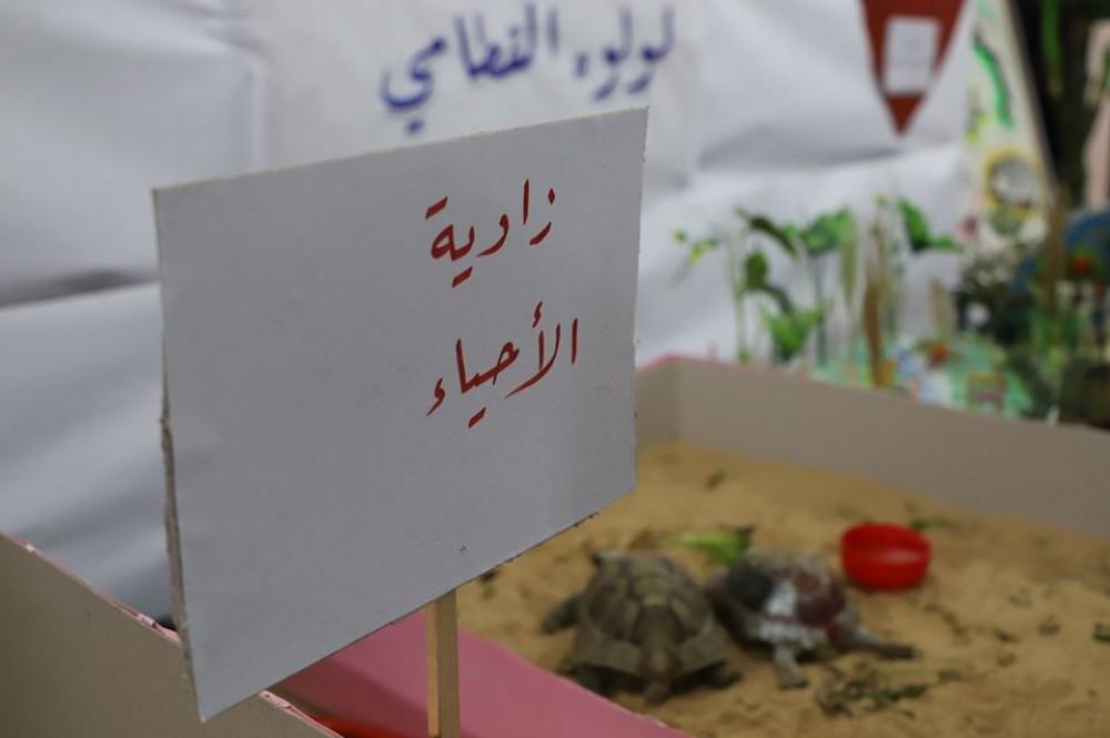 المعرض2