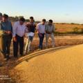 وزاره الزراعة تتلف 211 طن من علف (الخلطة)