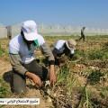 المشروع الزراعي