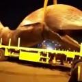 انتشال حوت نافق بحجم شاحنة من البحر في الكويت