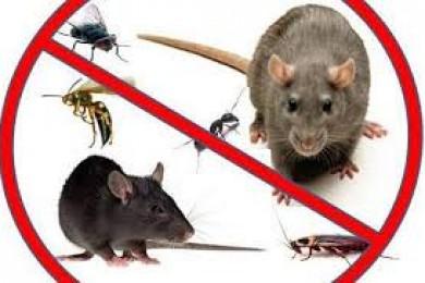 الصحة الوقائية تكثف جهود مكافحة القوارض والحشرات