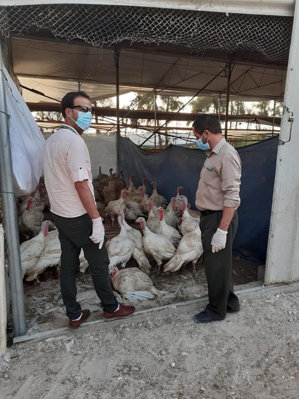 الزراعة:جولات مشتركة على مربي الحبش في محافظة خان يونس