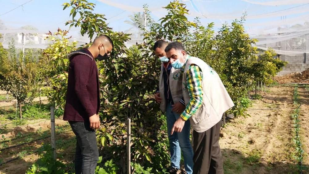 زراعة غزة تنظم جولات ميدانية على مزارعي الخضار