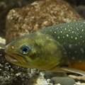 جوجل تطور نظام كاميرات يعمل بالذكاء الاصطناعى لمراقبة الأسماك.. فيديو