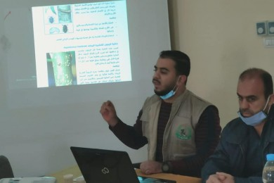 """زراعة رفح تناقش """"خطة الوزارة لتطوير قطاع الزيتون"""""""