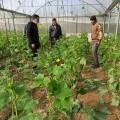 زراعة رفح تواصل جولاتها الميدانية على مزارعي الخضار