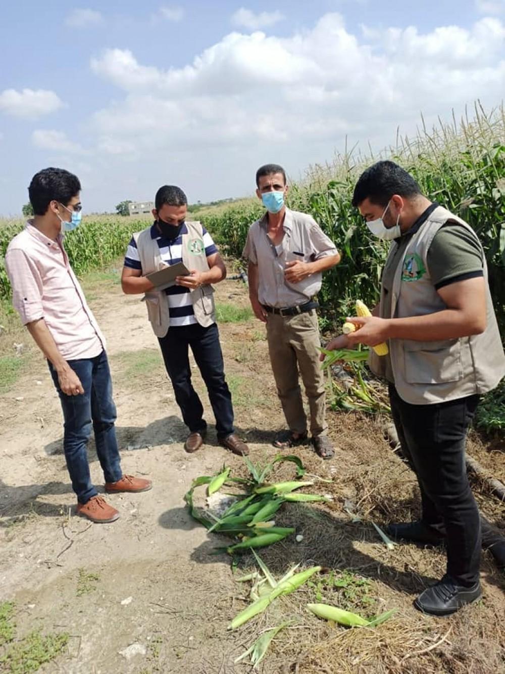 الزراعة تتابع الشكاوي الفنية لمزارعي الخضار