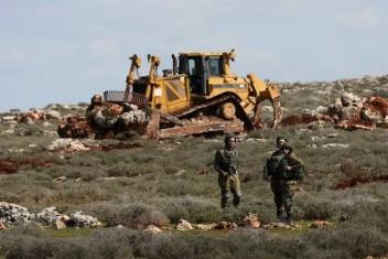اقتلاع أشجار نخيل في الأغوار وتجريف أراضي بالخليل