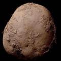 بيع صورة لحبة بطاطس بمليون يورو .. ما قصتها ؟!
