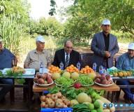 وزارة الزراعة تفتتح موسم اللوزيات في قطاع غزة/تصوير مدحت حجاج