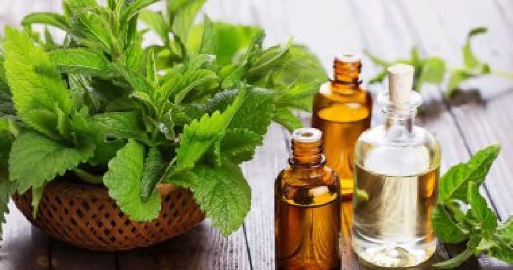 فوائد النعناع الأخضر على صحتك أهمها علاج القولون
