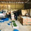 الزراعة تنفذ جولات على محطات فرز وتعبئة الخضار