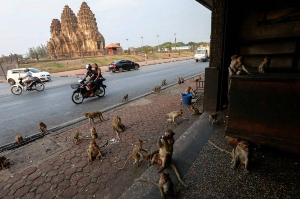 بعد حظر التجول: الحيوانات البرية تتسلل إلى شوارع هذه المدن الخالية
