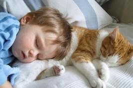 إحذروا القطط المنزلية فهي خطيرة على أطفالكم!