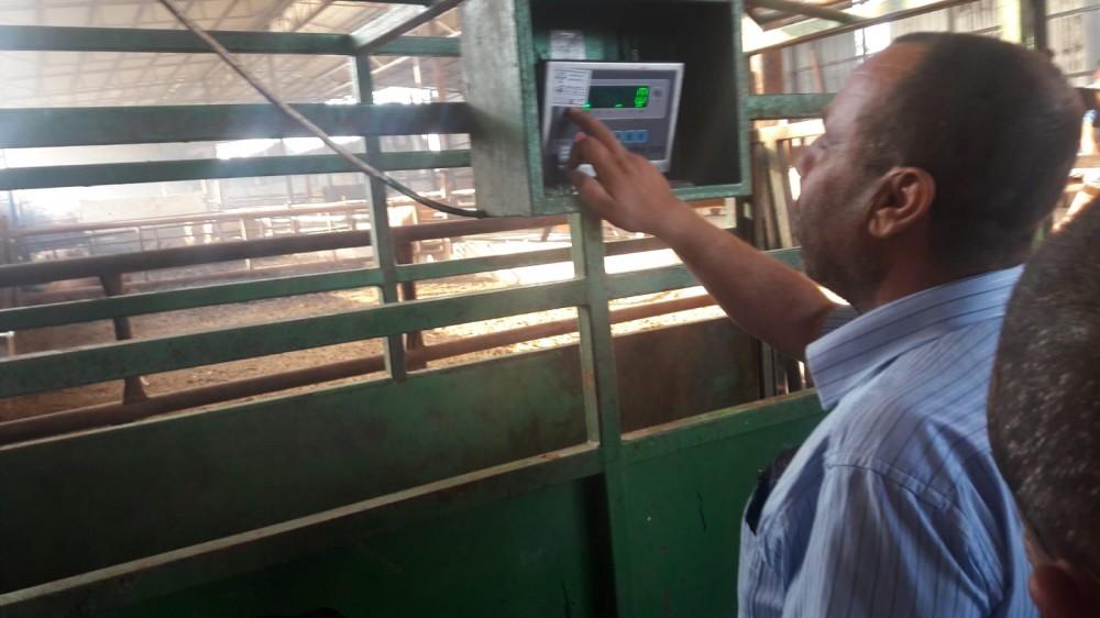 دائرة المكاييل والموازين تجري جولات تفتيشية لمزارع المواشي والابقار