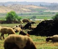 حياة المزارعين الفلسطينيين بين الطبيعة شمال قطاع غزة..تصوير | رشاد الترك