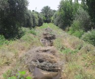 جولة وزارة الزراعة في مزرعة الزعتر شمال قطاع غزة