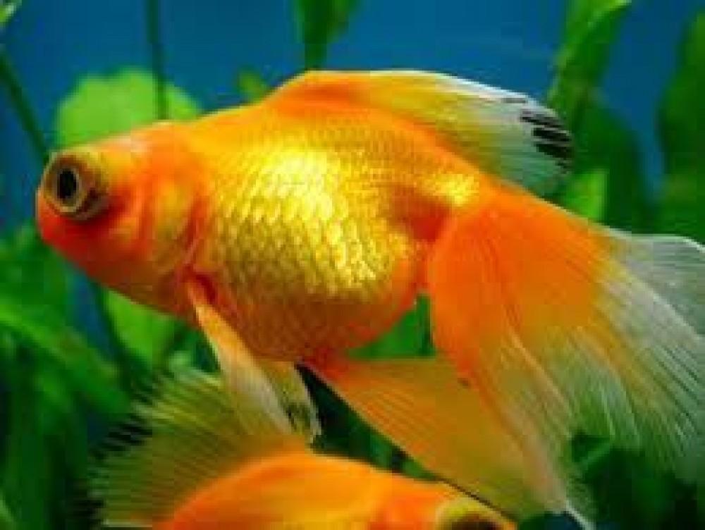 رجل وزوجه اعتقدا أن دواء الأسماك سيحميه من كورونا: وهذا ما حدث لهما