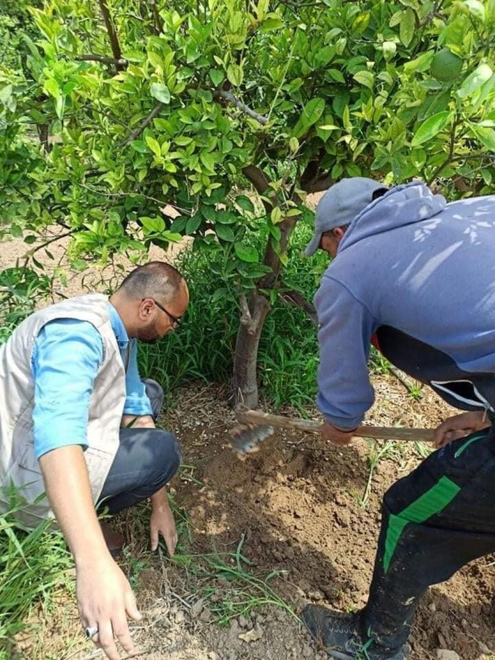 زراعة غزة تنظم جولة ميدانية على مزارع