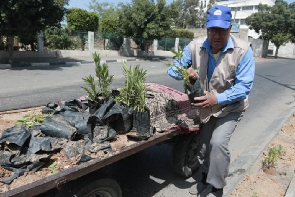 بلدية غزة تزرع   1500 شتلة خلال مايو الماضي