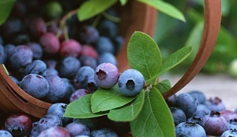 احرصوا على تناول هذه الفاكهة.. تعالج أخطر أمراض العين