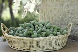 ما الذي تخفيه حبات اللوز الأخضر من فوائد!