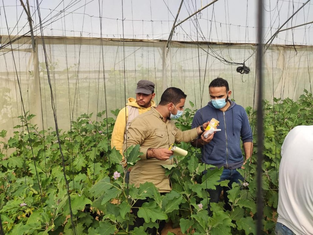 زراعة خانيونس تتابع شكاوي المزارعين في محاصيل الخضار