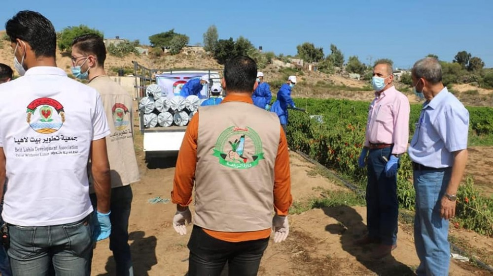 زراعة الشمال تتفقد مزارع الفراولة وتتابع توزيع المساعدات