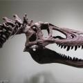 عرض ديناصور للبيع على موقع