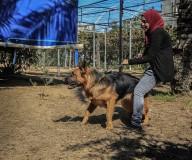 #صور: أول مدربة كلاب في قطاع غزة، الفتاة تاليا ثابت، من مخيم النصيرات.  تصوير | عطية درويش