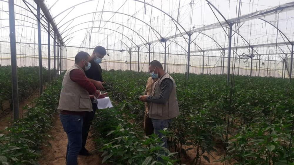الزراعة تتابع أصناف الخضار الجديدة التي تدخل القطاع
