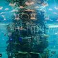 أكبر حوض للأسماك بالعالم في مطار جدة الجديد: يضم 2000 نوع نادر
