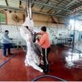 الزكاة بالأوقاف توزع اللحوم الطازجة علي 600 أسرة فقيرة