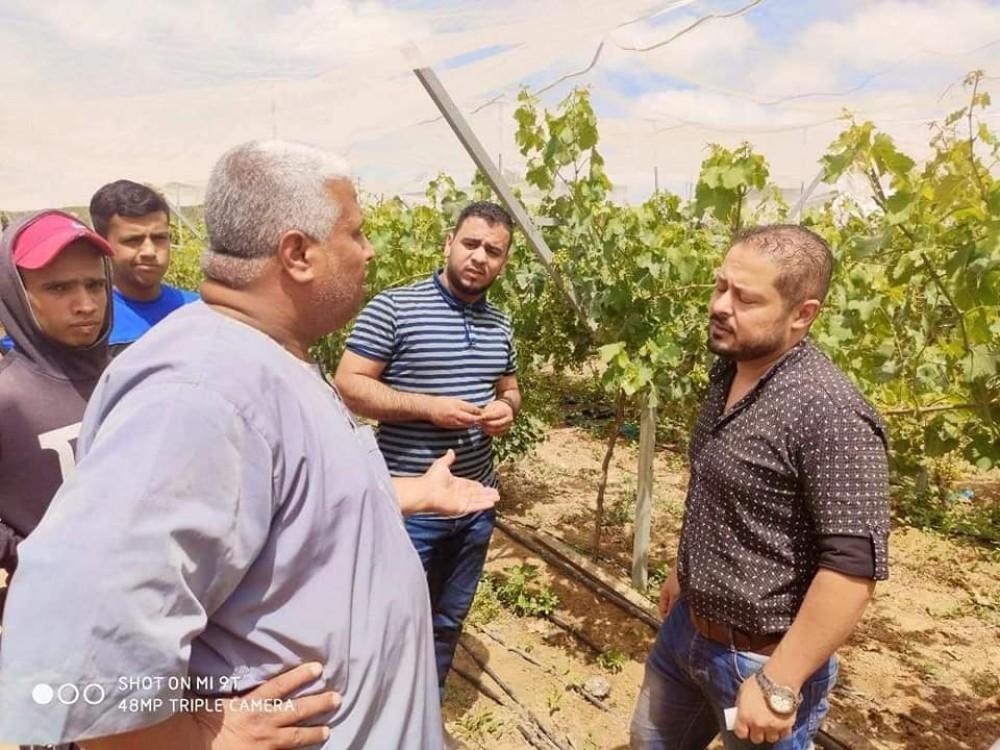 زراعة خانيونس تنظم جولة ميدانية علي مزارع العنب