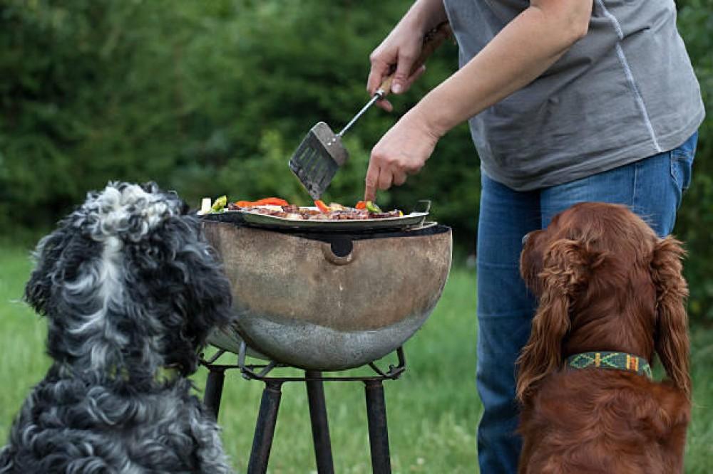 احذر من إعطاء الكلب لحوم من حفل الشواء والسبب !!