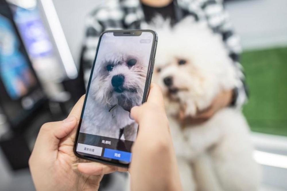 تقنية للتعرف على بصمة الأنف للحيوانات الأليفة في الصين