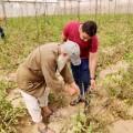 زراعة خان يونس تنظم جولة ميدانية على مزارعي  المواصي