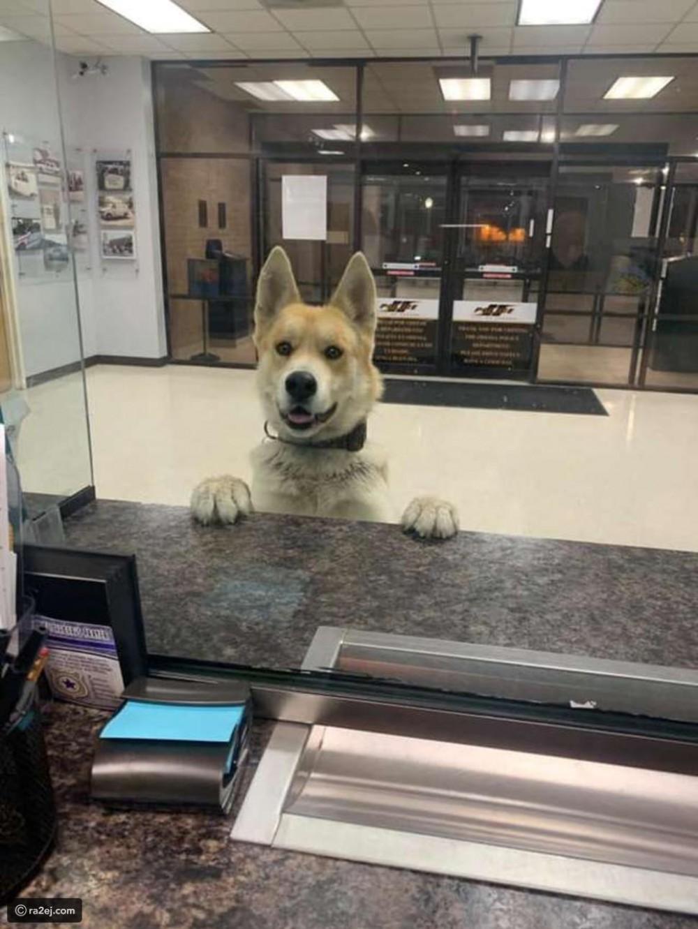 أذكى كلب في العالم: فقد طريقه فتوجه لتقديم بلاغ إلى الشرطة