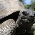 نفوق واحدة من أندر السلاحف في العالم