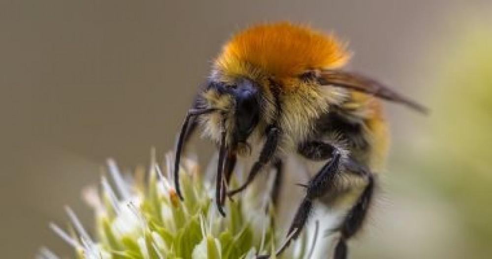 ماذا سيحدث إذا انقرضت الحشرات من كوكب الأرض؟