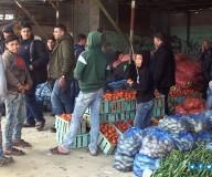وزارة الزراعة تنظم جولة لوسائل الإعلام على أسواق مدينة غزة للإطمئنان على توفر الخضروات واستقرار أسعارها/تصوير: مدحت حجاج