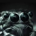 ظهور مخلوقات غريبة من عصور ما قبل التاريخ في أمريكا!