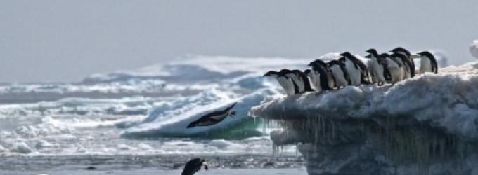 تغير جذري مفاجئ في القطب الجنوبي يحير العلماء!