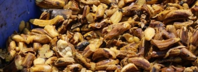 بلدية خان يونس تتلف 3 طن أغذية فاسدة وتشرف على ذبح 224 رأس ماشية