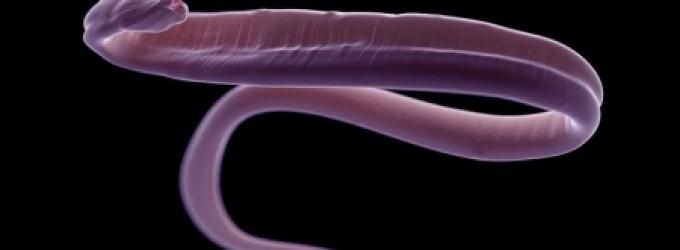 العلماء يوقظون كائنات حية مجمدة منذ 40 ألف عام