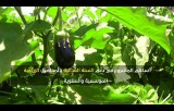 شاهد| المشروع الزراعي لدعم السلة الغذائية في شمال غزة