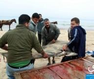 صيادو غزة يصطادون 400