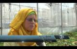 نبات البنجر ينمو في غزة وجعبته مليئة بالفوائد للمواطن